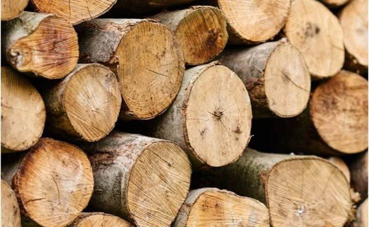 Timber Service